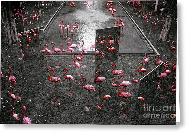 Greeting Card featuring the photograph Flamingo by Setsiri Silapasuwanchai