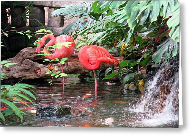 Flamingos Greeting Card by Betty Buller Whitehead