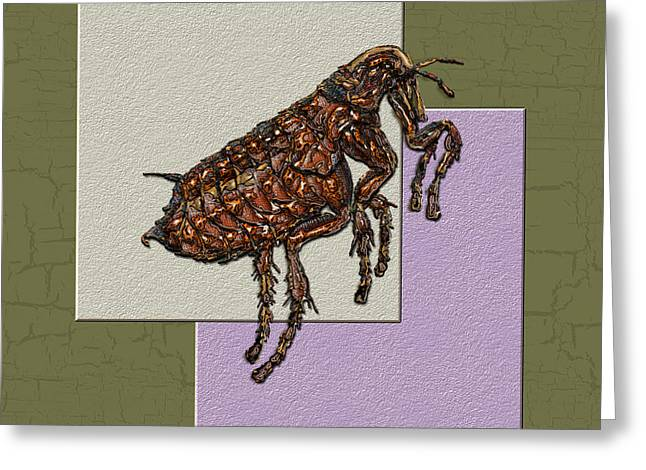 Flea On Abstract Beige Lavender And Dark Khaki Greeting Card