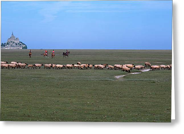 Flock Of Sheep Grazing In A Field Greeting Card by Panoramic Images