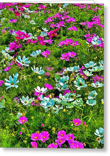 Flower Carpet. Greeting Card by Andy Za