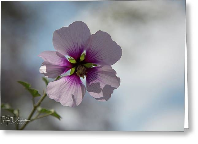 Flower In Focus Greeting Card