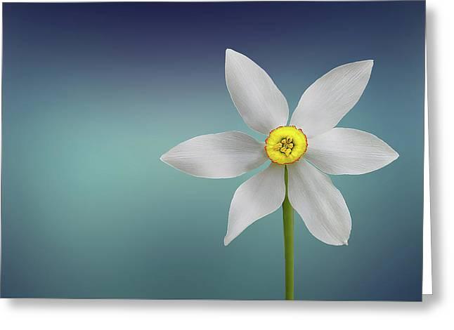 Flower Paradise Greeting Card