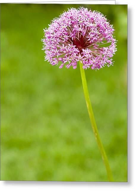 Flower Greeting Card by Sebastian Musial