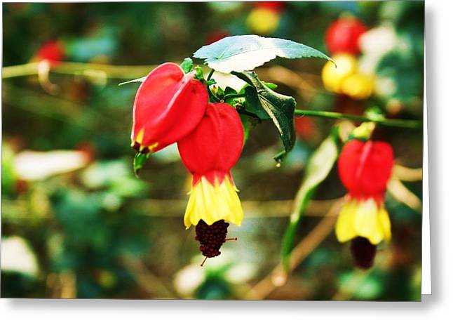 Flowering Plant Greeting Card by Michael C Crane