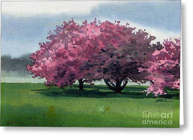 Cherry Paintings Greeting Cards - Flowering Trees Greeting Card by Donald Maier