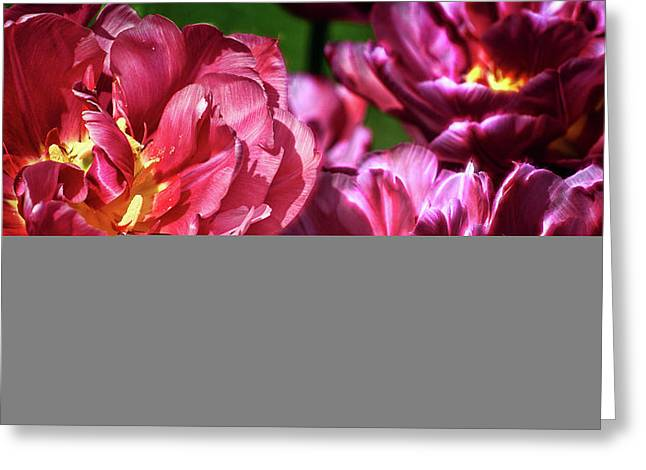 Flowers And Fractals Greeting Card