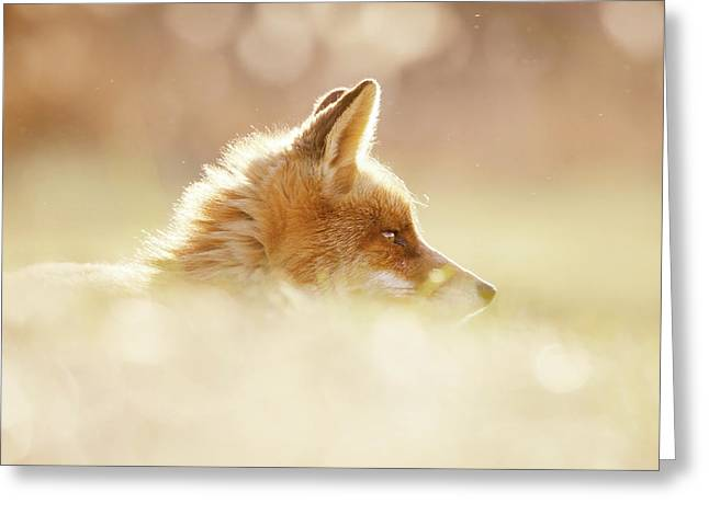 Focused Fox Greeting Card by Roeselien Raimond
