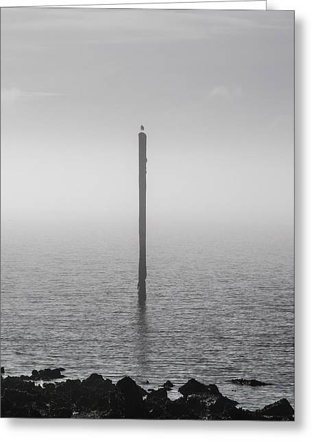 Greeting Card featuring the photograph Fog On The Cape Fear River by Willard Killough III
