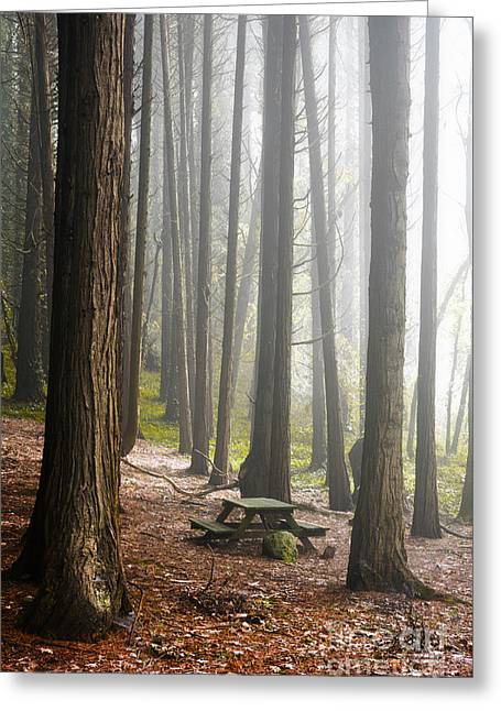 Foggy Forest Greeting Card by Carlos Caetano