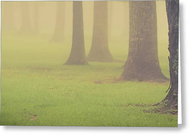 Greeting Card featuring the photograph Foggy Trees Pano by Joye Ardyn Durham