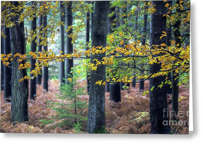 Forest Branch Greeting Card by Svetlana Sewell