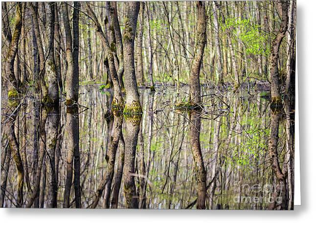Forest In The Swamp Greeting Card by Catalin Petolea