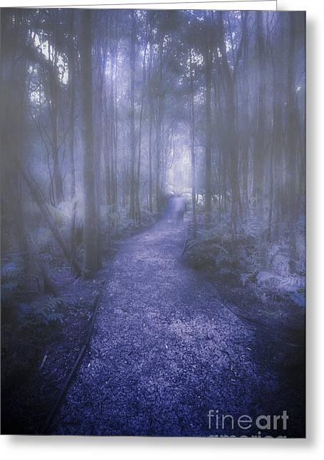 Forest Of Darkness Greeting Card by Jorgo Photography - Wall Art Gallery
