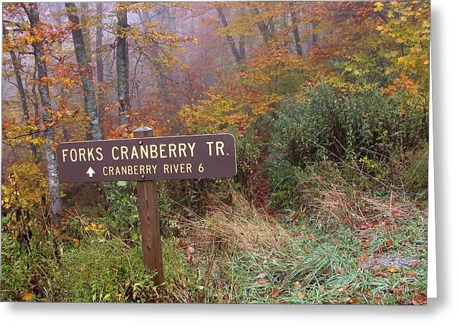 West Fork Greeting Cards - Forks of Cranberry Trail Greeting Card by Thomas R Fletcher