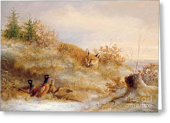 Hillsides Greeting Cards - Fox and Pheasants in Winter Greeting Card by Anonymous