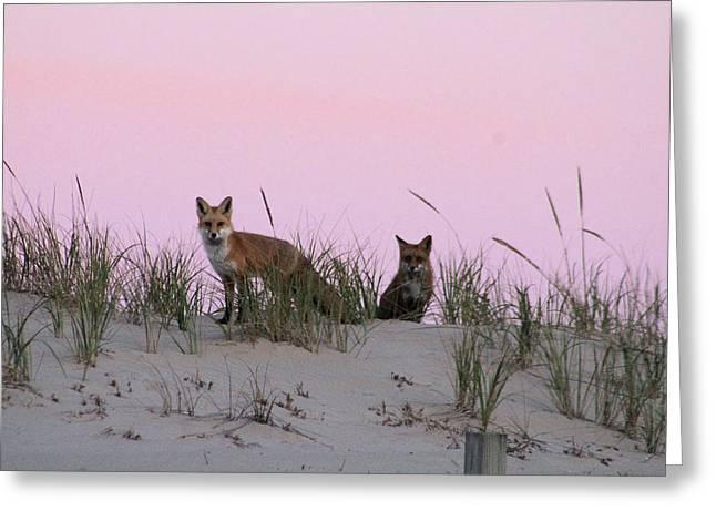 Fox And Vixen Greeting Card