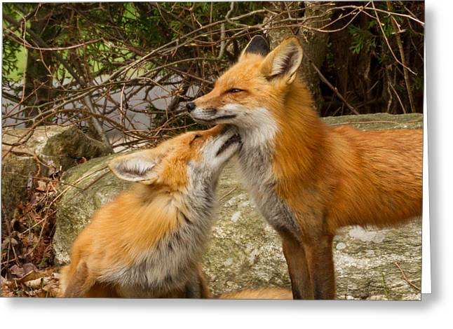 Foxes In Love Greeting Card