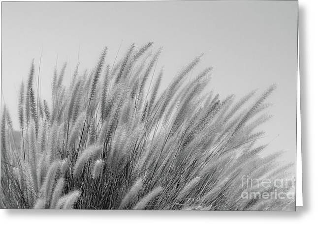 Foxtails On A Hill In Black And White Greeting Card