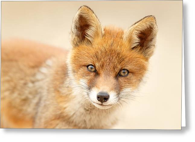Foxy Face Greeting Card by Roeselien Raimond