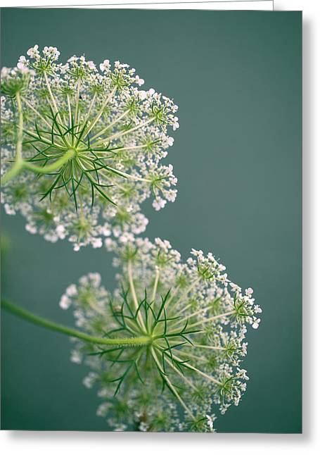 Fragile Dill Umbels On Summer Meadow Greeting Card