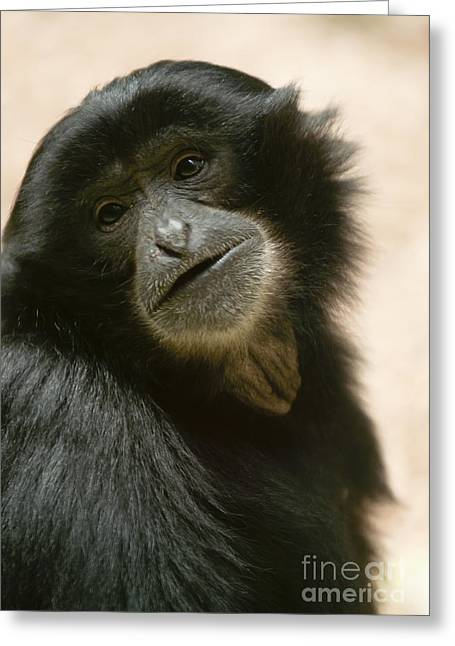 Funky Gibbon Greeting Card