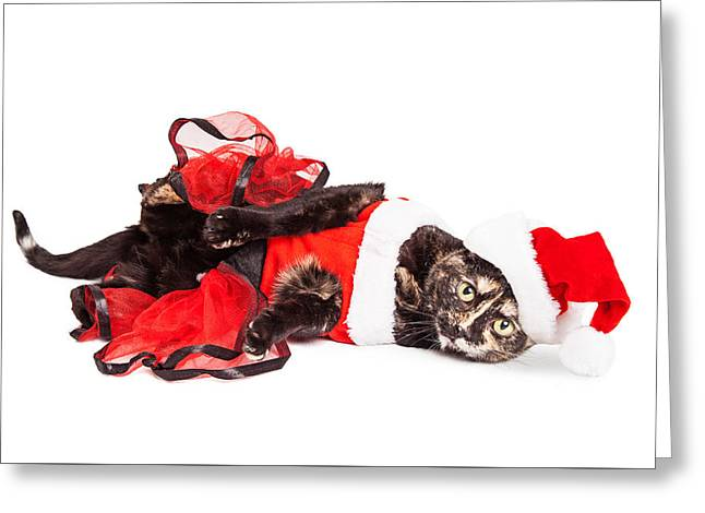 Funny Christmas Santa Cat Laying Greeting Card
