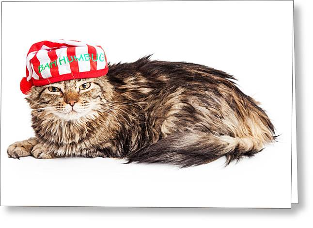 Funny Grumpy Christmas Cat Greeting Card
