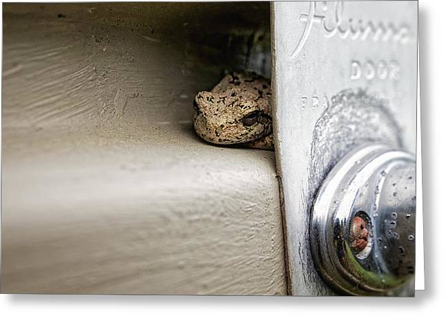 Greeting Card featuring the photograph Garage Door Tree Frog by Lars Lentz