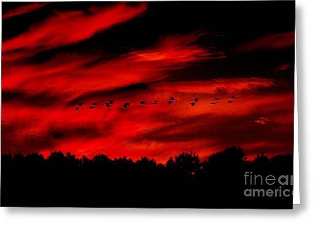 Geese Setting  Greeting Card by Kim Pate