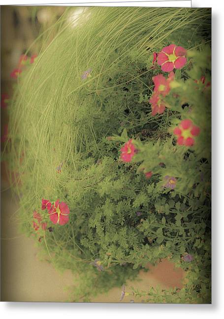 Gems In The Grass Greeting Card