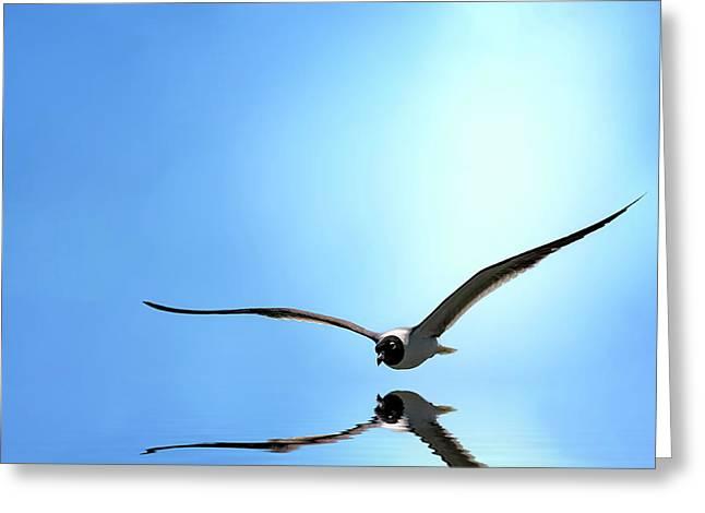 Gliding Greeting Card by Cyndy Doty