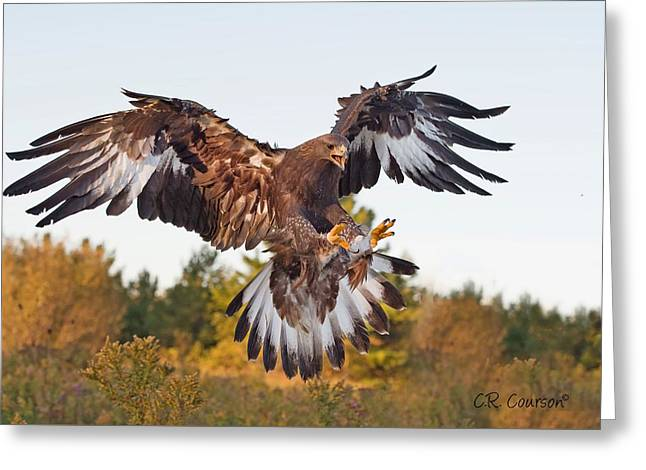 Golden Eagle Greeting Card by CR  Courson