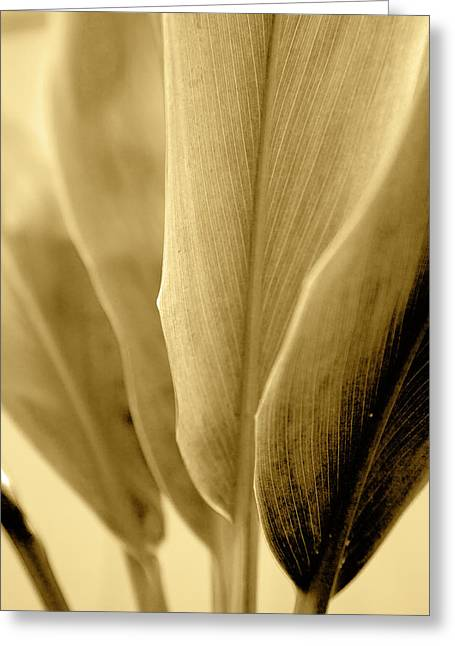 Golden Leave Bases Greeting Card by Sean Davey