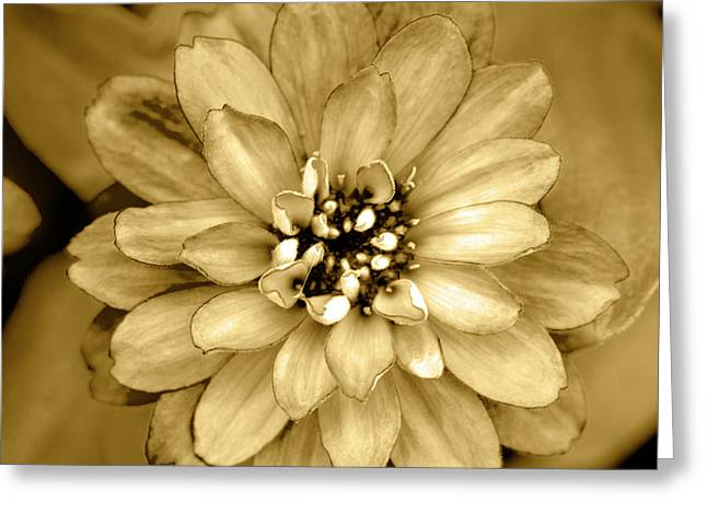Golden Bloom Greeting Card by Sean Davey