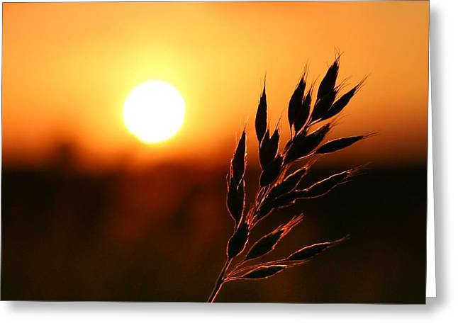 Golden Sunset Greeting Card by Franziskus Pfleghart
