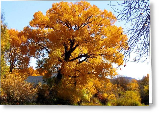 Golden Tree Greeting Card by Gigi Kobel