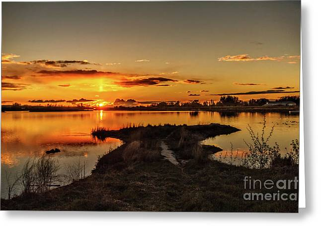 Golden View Greeting Card by Robert Bales