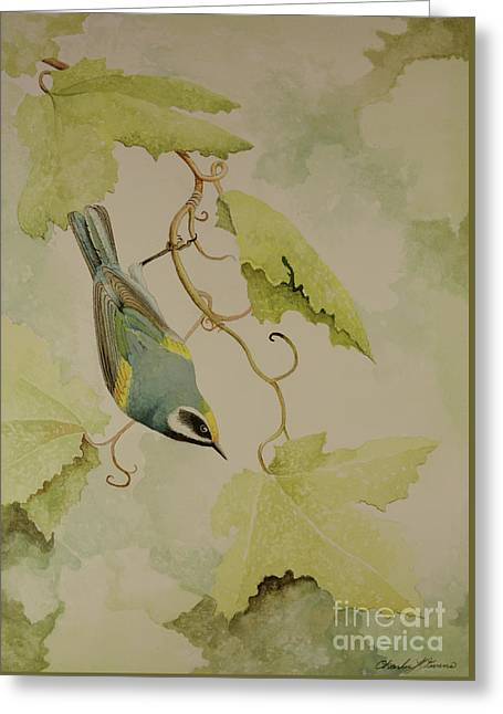 Golden-winged Warbler Greeting Card