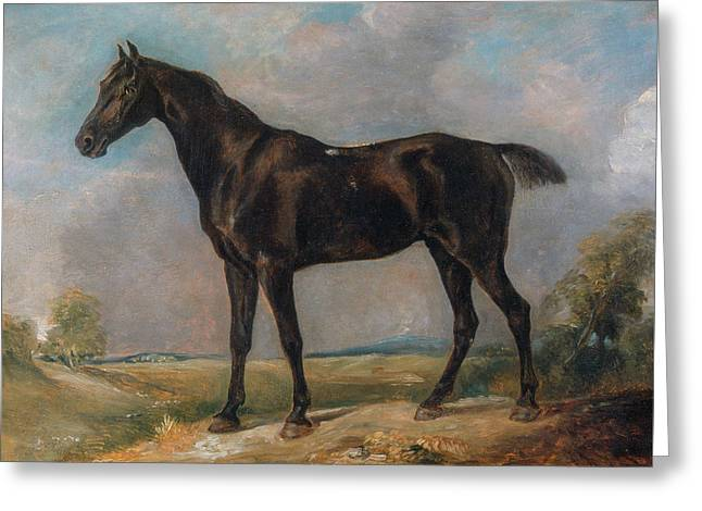 Golding Constable's Black Riding-horse Greeting Card by John Constable