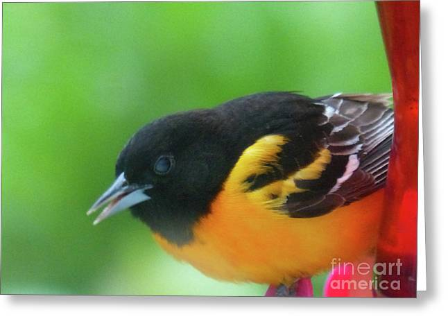 Good Morning Mr. Oriole Greeting Card