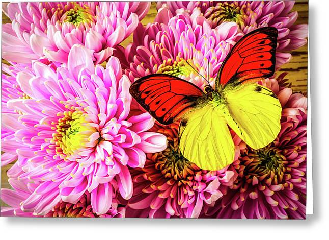 Gorgeous Orange Yellow Butterfly Greeting Card