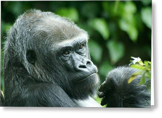 Gorilla Headshot Greeting Card by Sonja Anderson