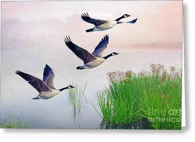 Graceful Geese Greeting Card