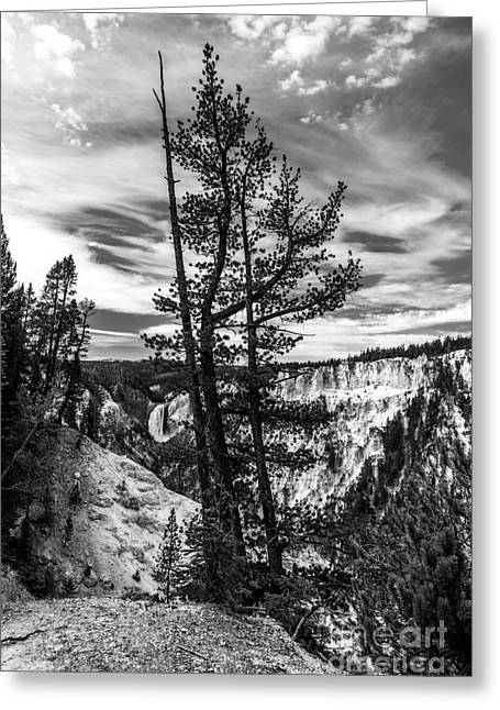 Grand Canyon Of The Yellowstone Bw Greeting Card by Mel Steinhauer