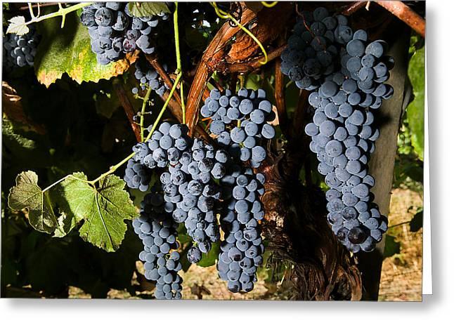 Grape Vineyard Greeting Card by PhotographyAssociates