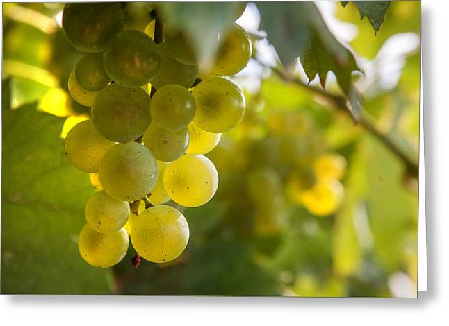 Grapes Filled With Sun Greeting Card