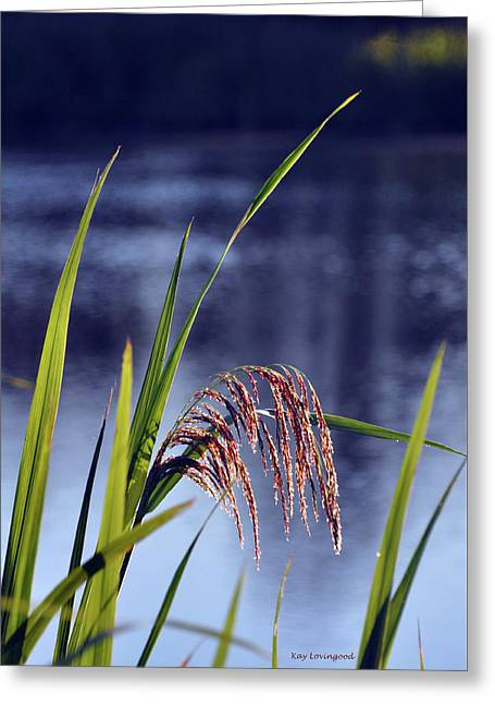 Grass Feathers Greeting Card by Kay Lovingood