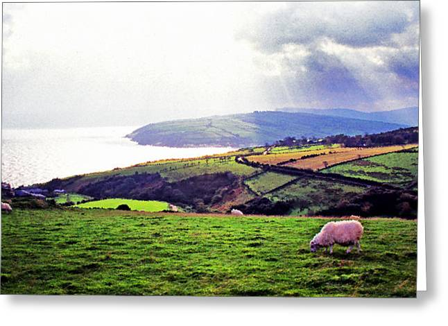 Crepuscular Rays Greeting Cards - Grazing Sheep County Antrim Greeting Card by Thomas R Fletcher