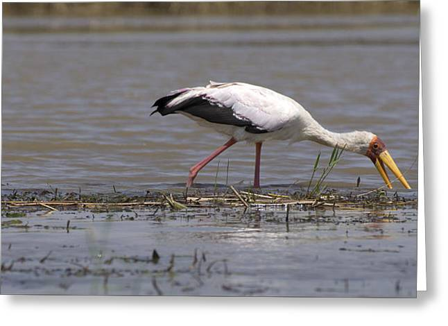 Great Rift Birds Greeting Card